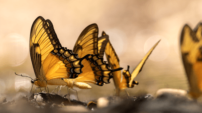 in the time of the butterflies study guide