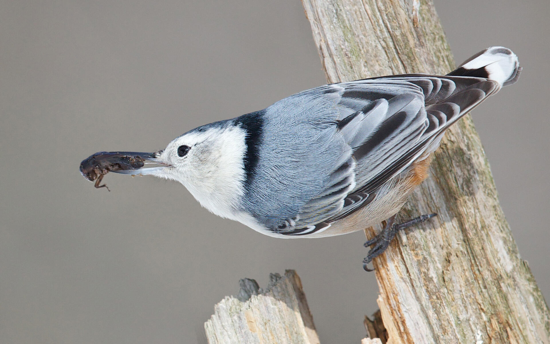 a birding guide to the long point area