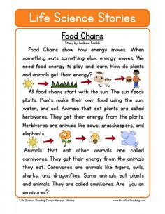 canada food guide worksheets grade 2