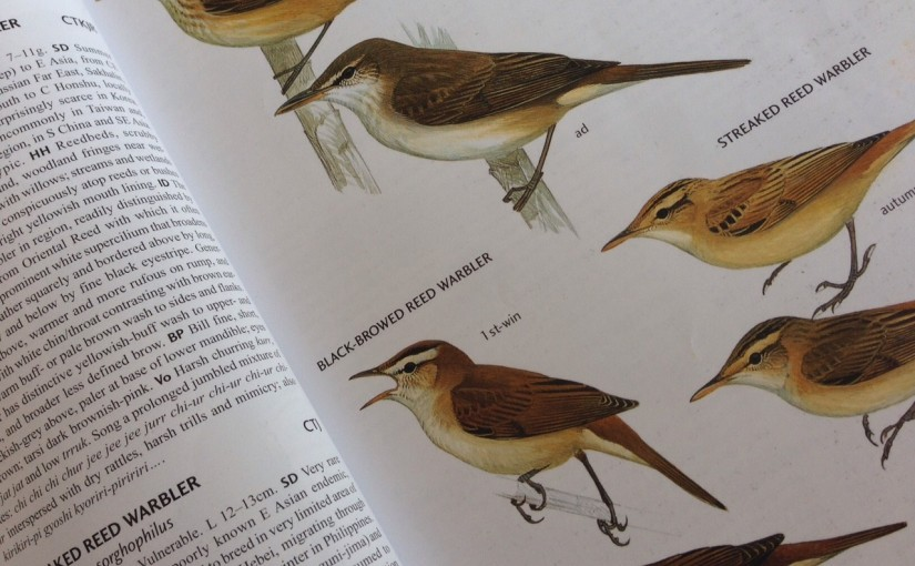 birds of china field guide