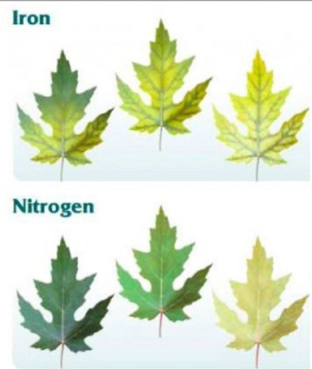 guide to nutrient deficiency symptoms in plants