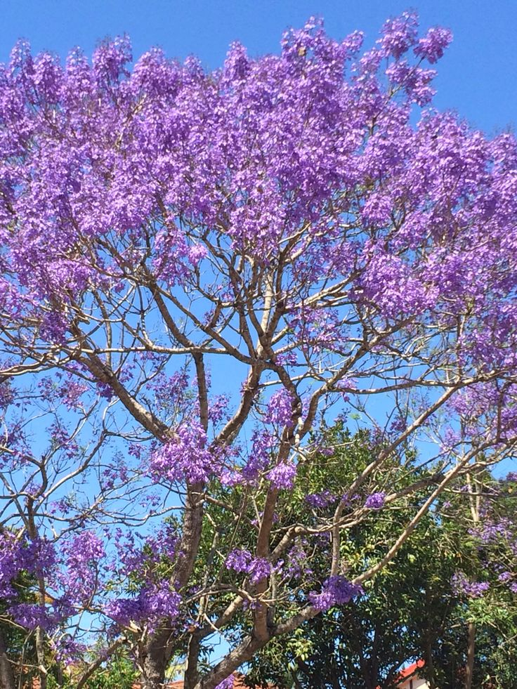 flowers of costa rica guide